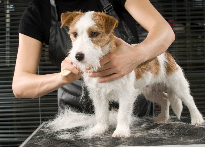 What Are the Services Offered by Pet Groomers in Singapore? Treat Your Pet Like Royalty
