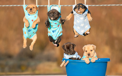 A Comprehensive List Of Basic Products You Will Need If You Are A First Time Owner Of A Puppy