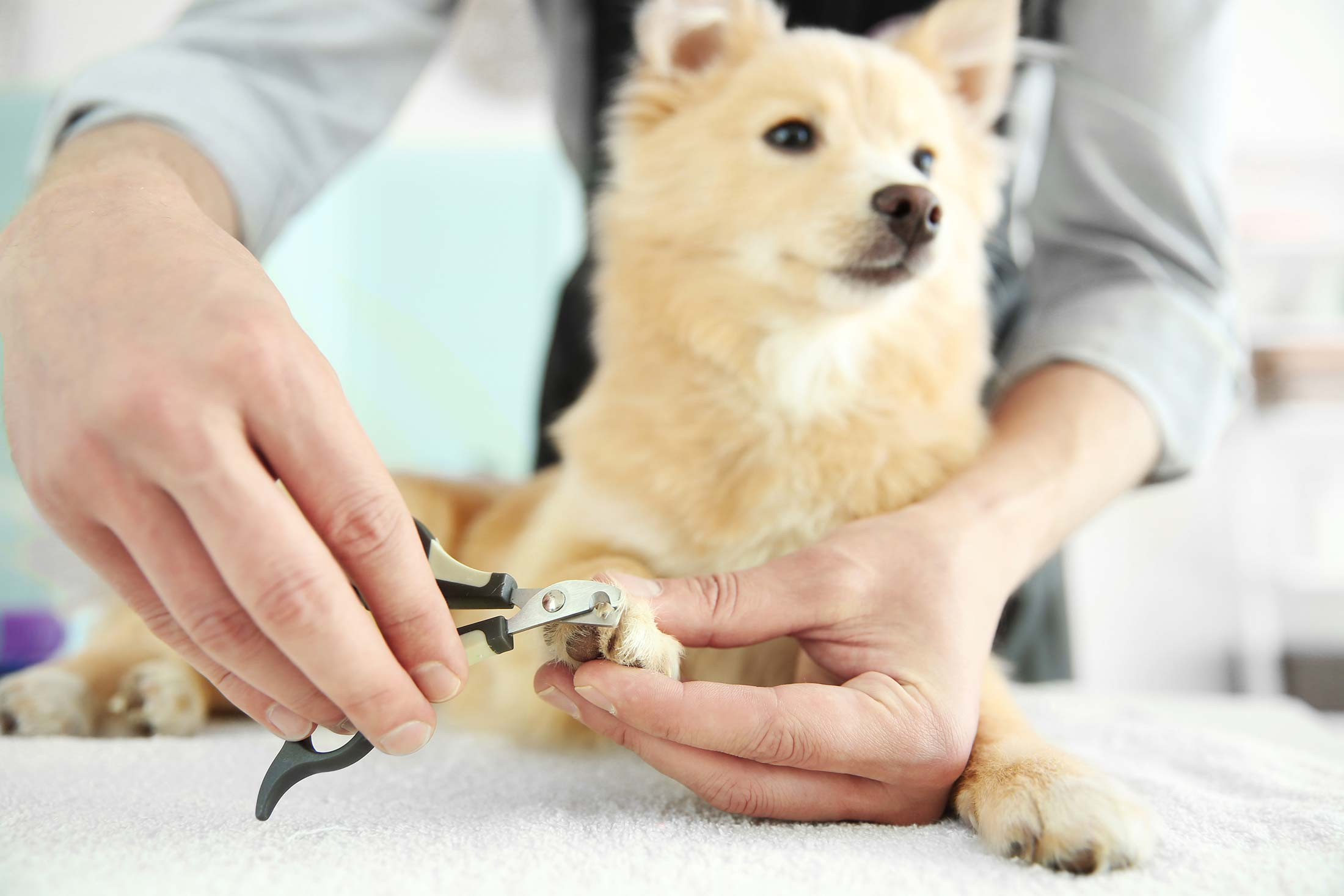 Nail trimming service