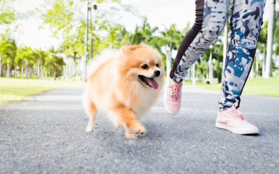 List Of HDB Approved Dogs In Singapore [2019 Edition]